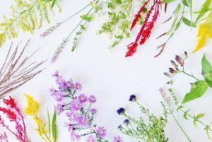 Flowering Herb